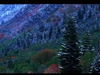 Early Snow In Little Cottonwood Canyon