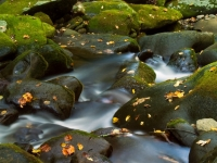 The Great Smoky Mountains Roaring Fork Motor Trail Stream