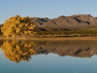 Bosque Del Apache Reflections
