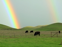 Pot Of Gold At Rush Ranch