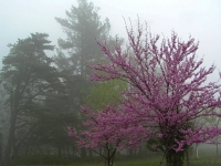 Fog And Bloom