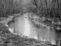 Winter Stream In Black And White
