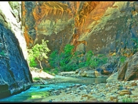 The Tree Of Life In Zion Narrows