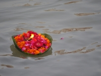 Flower On River