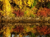 Mirrored Colors Of Fall