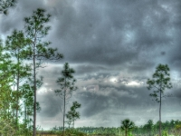Everglades Hdr2