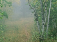 Foggy Trail On Bald Mountain
