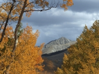 Mt. Princeton Through The Trees