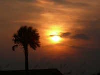 Palmetto Sunset