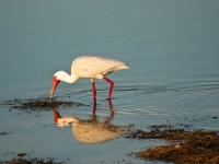 Breakfast Nibble