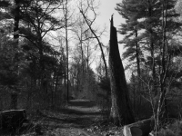 B&w Walk In The Woods