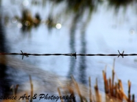 Barbedwire Reflections