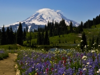 Path To Mt Rainier