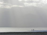 Waders At Inundated Badwater Basin, Death Valley Np