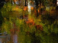 Monet's Reflection
