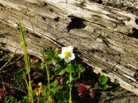 Flower And Driftwood