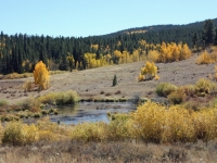 Beaver Pond And Colors