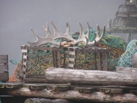 Antlers And Lobster Pots