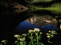 Maroon Bells Reflection And Flowers