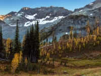 Maple Pass Larches