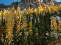 North Cascade Larches