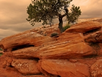 Lone Pine Of Broken Arch Trail