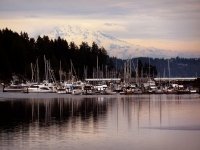 Gig Harbor Safe Haven