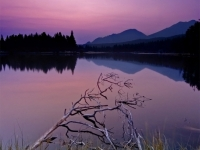 Sprague Lake Dawn