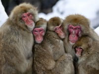 Huddled Monkey Family
