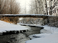 Log Over Panguitch Creek
