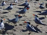 Terns Convention