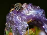 Wet Bee In Purple