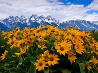Spring In The Tetons