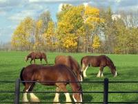 Fall Pastures