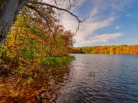 Fall, Trunk, Trees, Reservoir, Sky, Clouds, Hdr