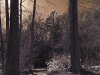 Infrared Forest