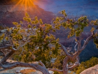 Last Rays On Yavapai Point, Grand Canyon Np, Az