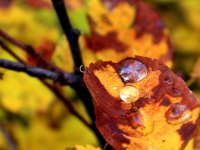 October Colors And Raindrop