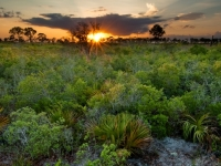 Evening In Florida Scrub