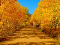Chicago Creek Road In The Fall