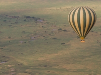Seregeti Plains From A Hot Air Balloon