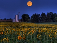 Sunflower Moon