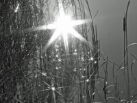 Pond (black And White Sun Reflection)