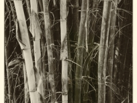 Bamboo Abstract