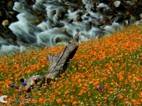 Of Rivers And Poppies