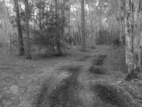 Dirt Path Through The Florida Woods In Black And White2