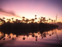 Loxahatchee River At Sunrise
