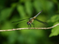 Img_0040 Dragonfly
