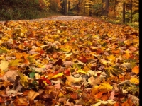 Cold Springs Fallen Leaves