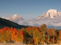 Tetons And Aspens